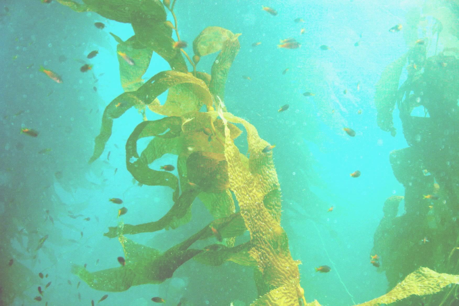 le alghe33